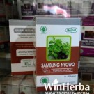 Sambung Nyowo Herbal Indo Utama
